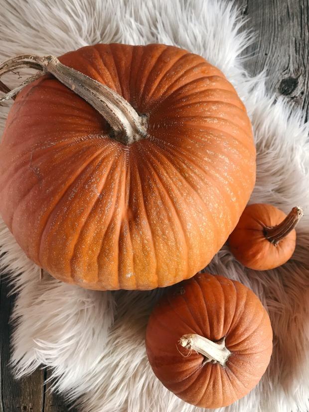 Spiced Pumpkin Seeds 6